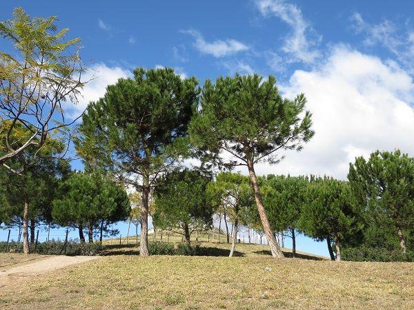 El Parque de Cabecera valencia