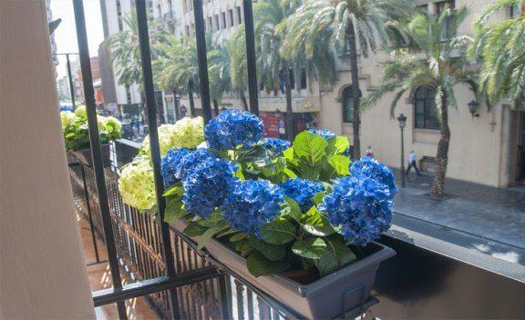 lotelito balcon