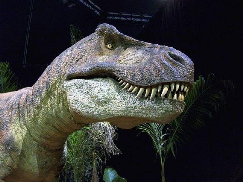 dinosaurio t rex