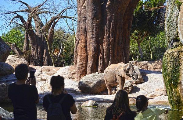 Primavera 2018 visitantes junto al lago de los elefantes BIOPARC