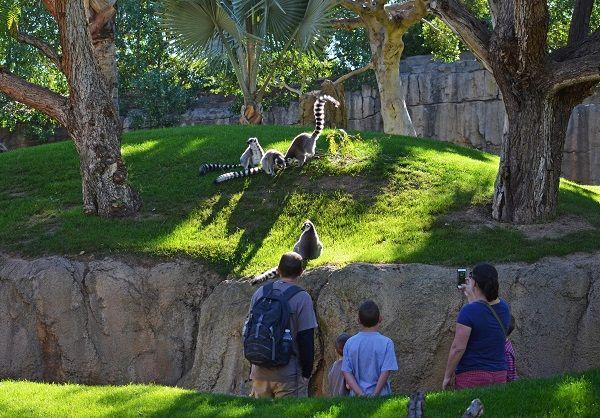 Turistas en BIOPARC Valencia isla de Madagascar donde habitan los lemures