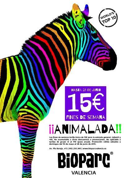 ANIMALADA-BIOPARC-VALENCIA-2015-web