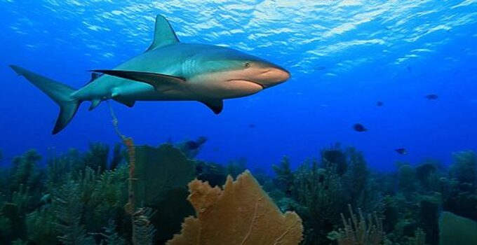 'Arrecifes. Oasis de vida', un documental submarino que veremos en el cine