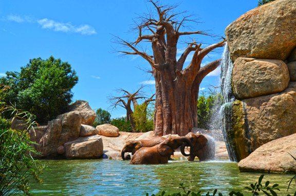 BIOPARC Valencia - lago de los elefantes 2015