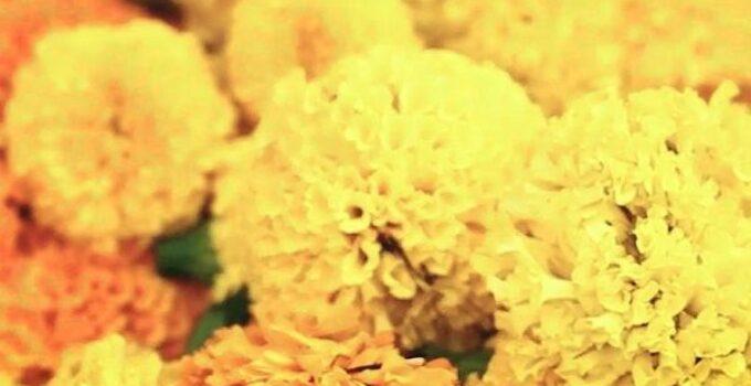 claveles valencia