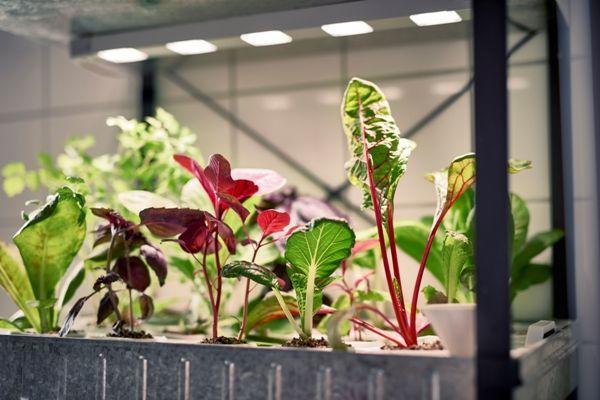 ikea-coleccion-indoor-gardening-2016-ph133368-cultivo-hidroponico-acero-negro-galvanizado