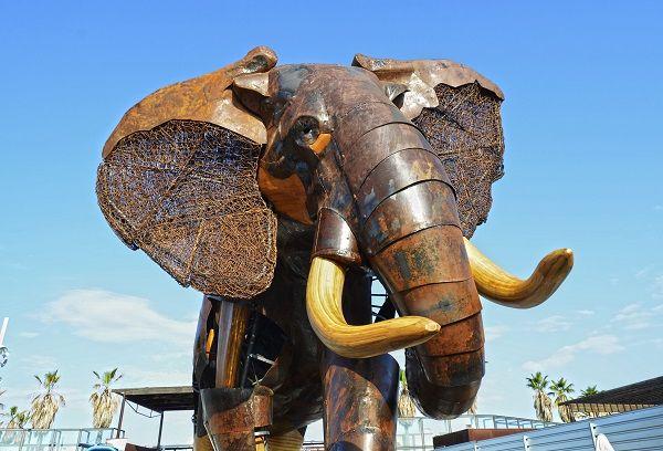 Elefante escipión Plaza exterior BIOPARC Valencia