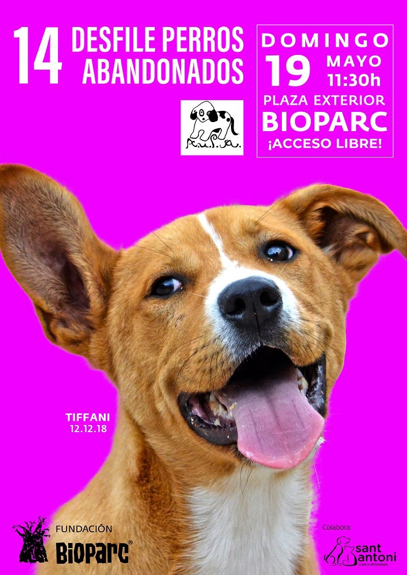 Acto solidario, Animales, Bioparc, Perros