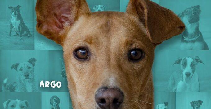 Desfile de perros abandonados para fomentar su adopción organizado por AUPA y Bioparc Valencia