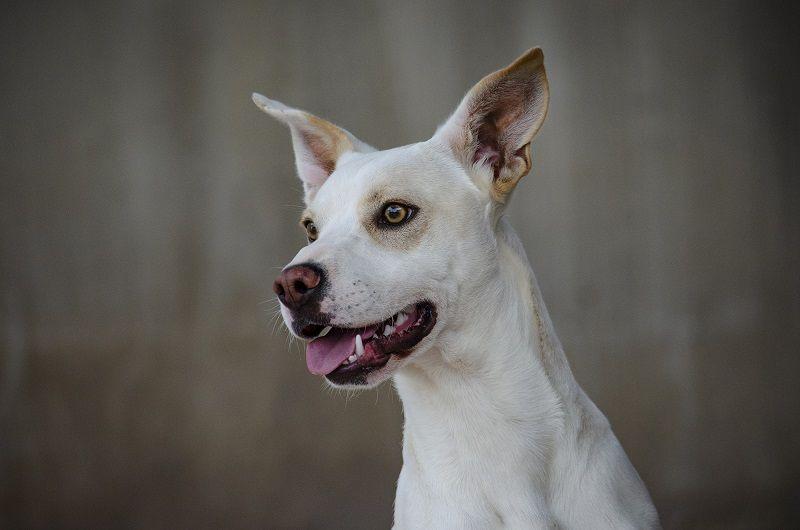 Desfile de perros abandonados para fomentar su adopción organizado por AUPA y Bioparc Valencia valencia