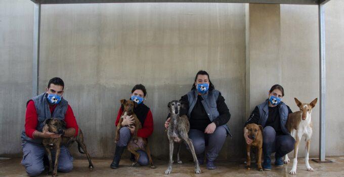 """A.U.P.A y BIOPARC Valencia organizan un desfile """"virtual"""" de perros abandonados"""