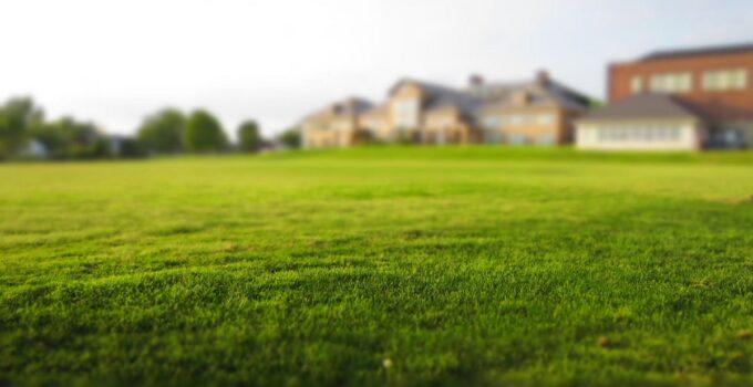 5 consejos para tener un césped verde este verano