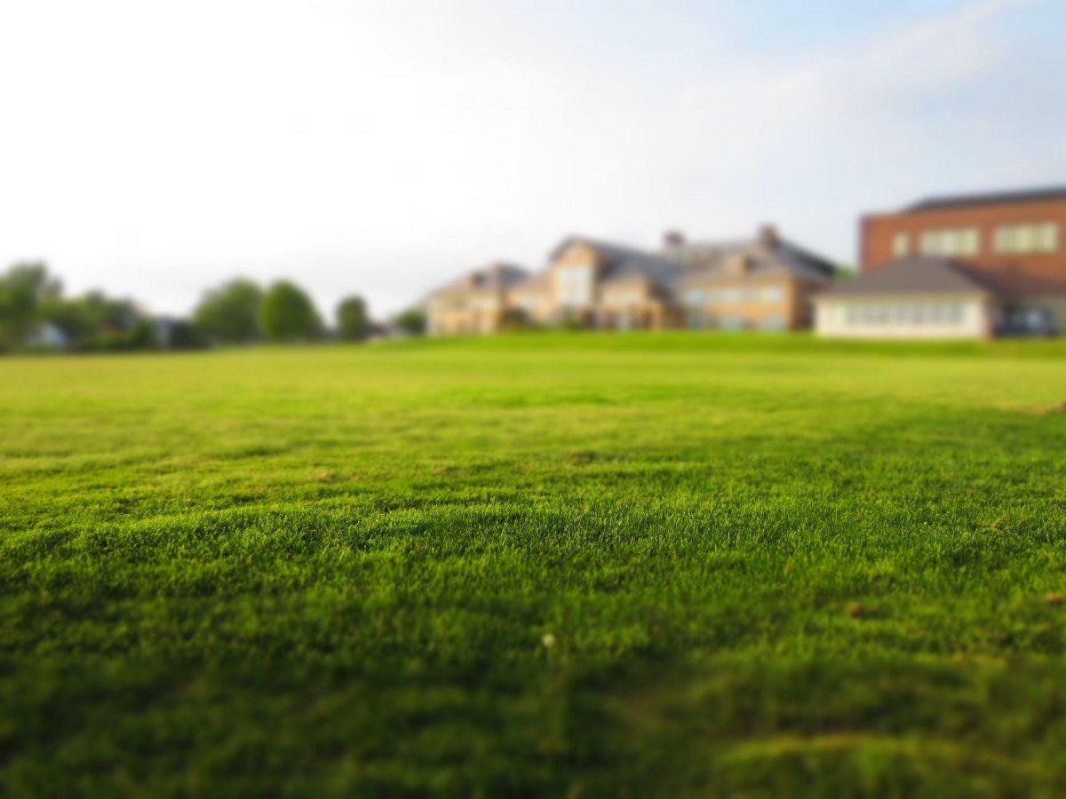 5 consejos para tener un césped verde este verano valencia